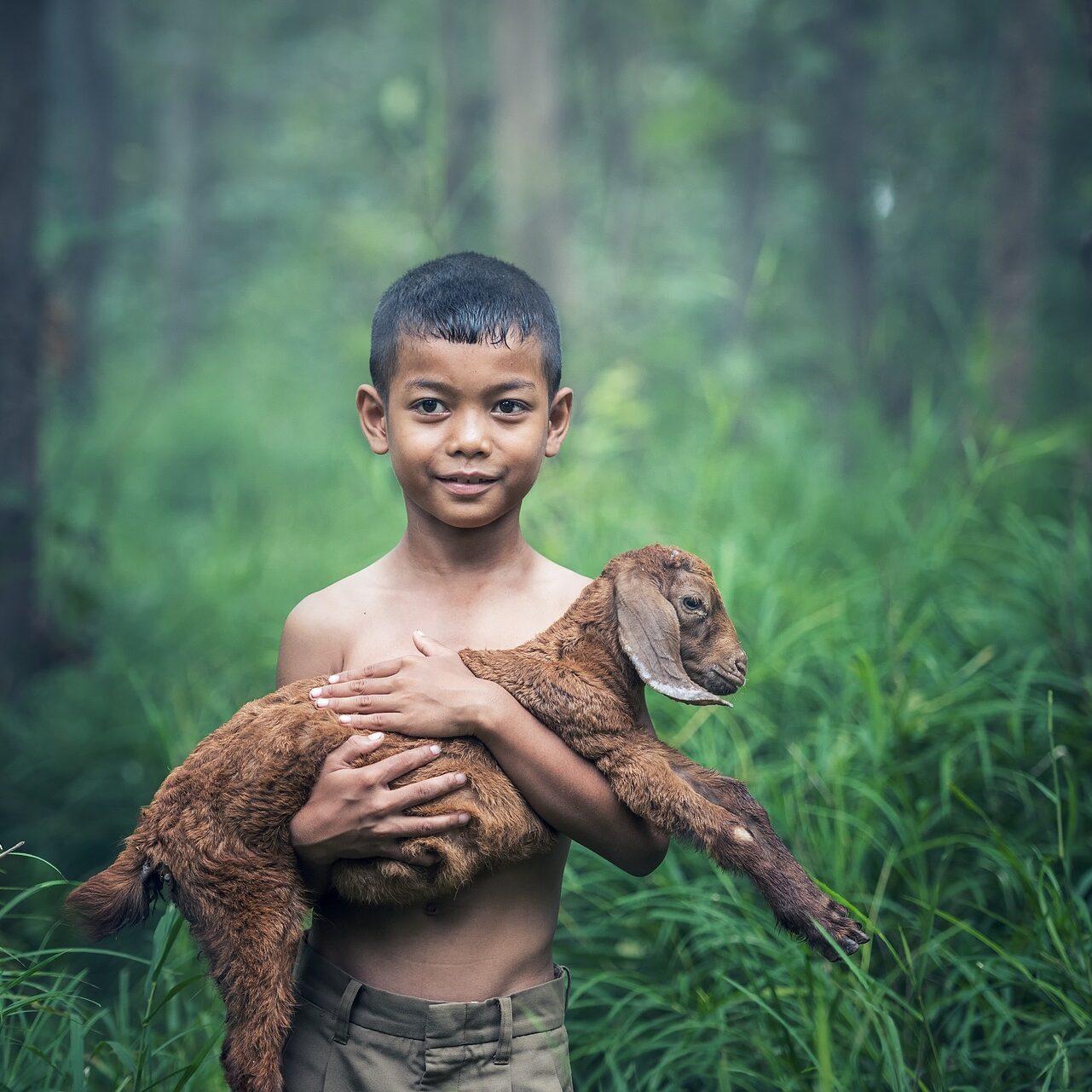 boy-and-lamb