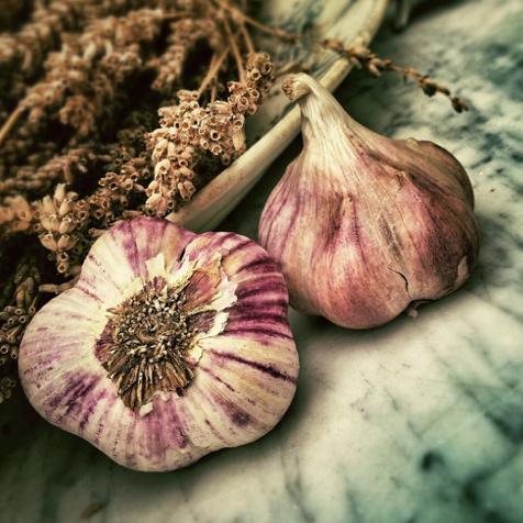 garlic-squared
